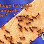 Bevált praktikák hangyák ellen