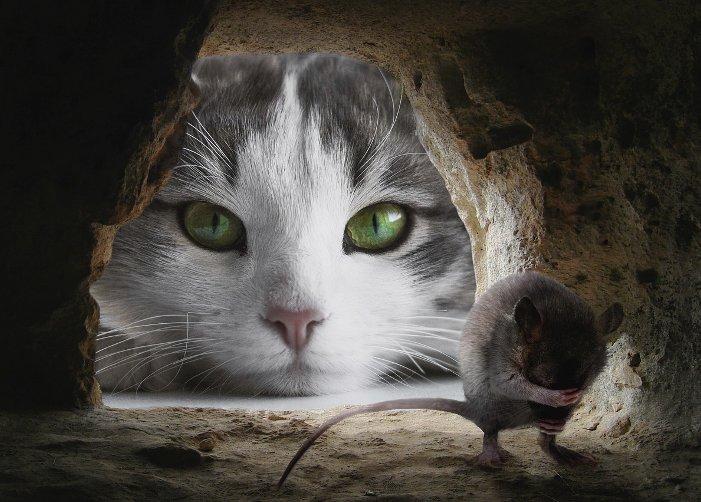 Cica lesi az egeret