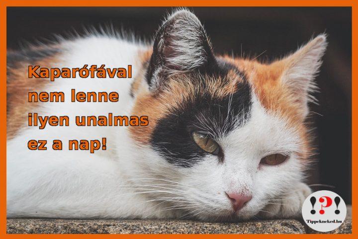 Kaparófa cicáknak - nélküle unalmas az élet!