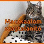 Macskaalom szagtalanítás házilag