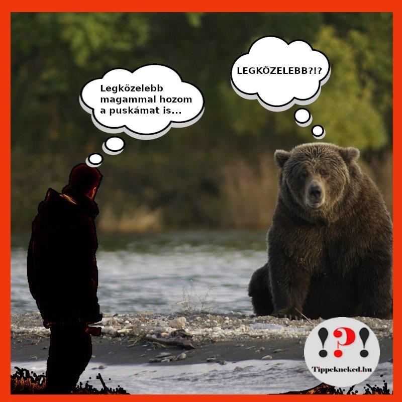 A medve és a vadász